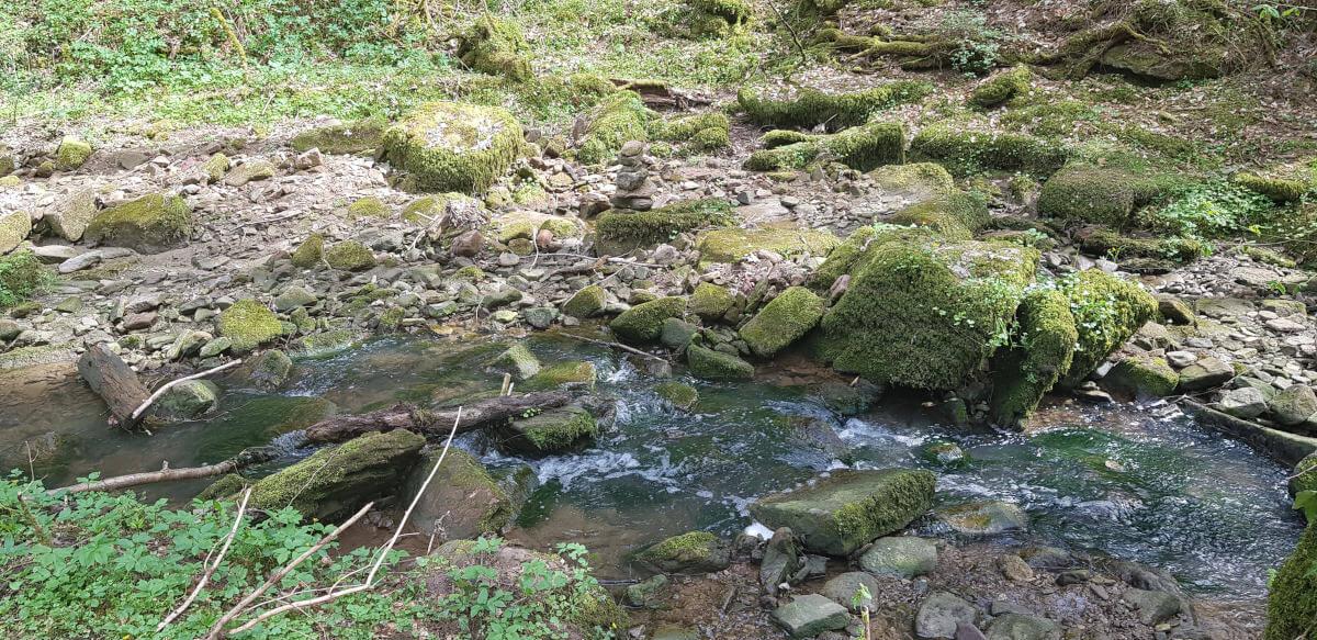 Traumhafte Natur rund um die Fuchsklinge in Hirsau